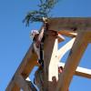 Frame Raising Pine Bough 02