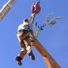 Frame Raising Pine Bough 06